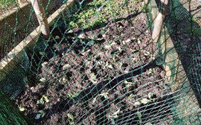 My vegetable garden project – Part 3